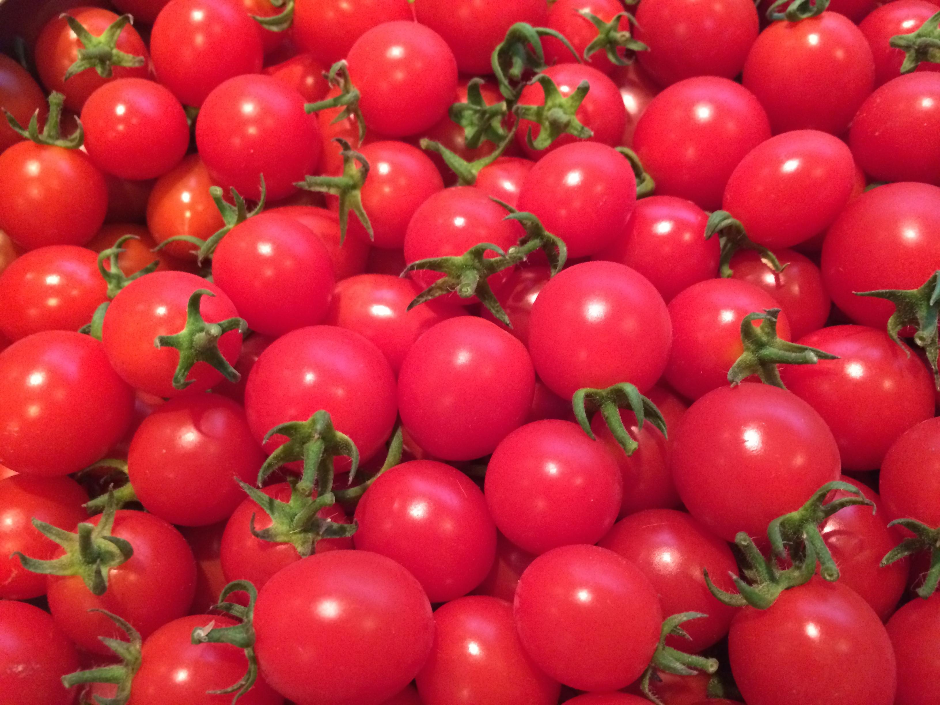 北海道産直トマト